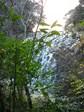 鹿目の滝5