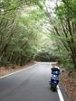 樹のトンネル1